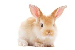 младенец изолировал одного детеныша кролика Стоковое Фото
