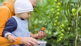 Младенец и бабушка комплектуют томаты акции видеоматериалы