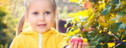 Младенец маленькой девочки ест сезонные яблока стоковое изображение