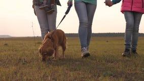 Младенец матери, дочь и собака, туристы перемещения семьи с собакой через поле : совместная работа a акции видеоматериалы