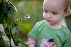 младенец меньший ярд Стоковые Фотографии RF