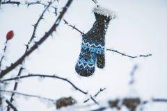 Младенец перчатка висит на ветви одичалого поднял на day_ зимы стоковая фотография