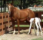 младенец подавая ее мама Стоковая Фотография RF