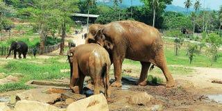 Младенец eliphant с матерью стоковые фотографии rf
