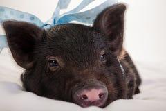 младенец piggy Стоковое фото RF