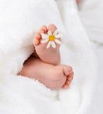 Младенческая нога с маленькой белой маргариткой Стоковое Изображение RF