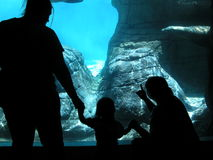 млекопитающаяся вода Стоковые Изображения