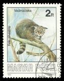 Млекопитающие, дикая кошка стоковая фотография rf