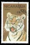 Млекопитающие, тигр стоковое изображение