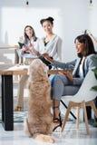 Многонациональные женщины в официально носке работая на офисе с собакой Стоковые Фото
