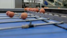 Многоуровневая производственная линия транспортера производственной линии ЯИЧКА яичек цыпленка птицефермы акции видеоматериалы
