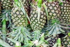 Много ананас Стоковые Изображения