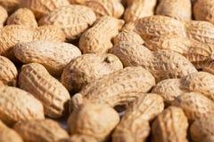 Много арахисов в раковине Стоковая Фотография
