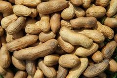 Много арахисы Стоковые Изображения RF