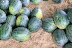 Много больших сладостных зеленых арбузов в рынке плодоовощ Стоковое Изображение