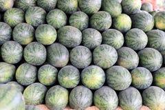 Много больших сладостных зеленых арбузов в рынке плодоовощ Стоковое Фото