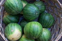Много больших сладостных зеленых арбузов продают на рынке Sukawati натуральных продуктов, тропическом острове Бали, Индонезии Стоковое Изображение