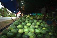 Много больших сладостных зеленых арбузов Стоковое Изображение RF