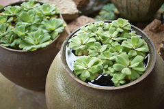 Много водоросль Стоковое фото RF