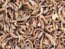 Много высушили листья конец-вверх, листву осени стоковое фото