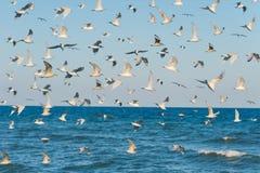 Много голодные чайки на предпосылке неба и моря Стоковые Фото