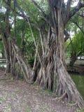 Много дерево выглядеть как как только одно стоковые фотографии rf