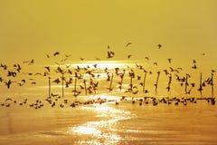 Много летание чайки Стоковая Фотография RF
