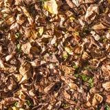 Много желтые и оранжевые сушат листья лежа на том основании текстура стоковые фото