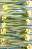 Много желтых narcissus на таблице Стоковое Изображение RF