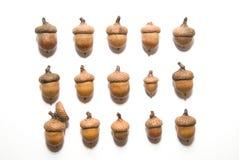 Много жолудей с крышками дальше над белизной Стоковая Фотография