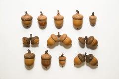 Много жолудей с шляпами дальше над белизной Стоковое фото RF