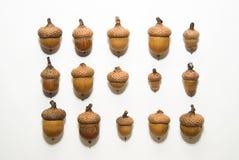 Много жолудей с шляпами дальше над белизной Стоковое Фото