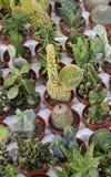 Много заводов кактуса для продажи в парнике стоковые изображения rf