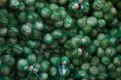 Много зеленая капуста в сумках Стоковое Изображение RF