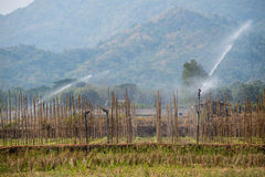 Много зеленых капуст в земледелии fields на Phutabberk Phet Стоковое Изображение RF