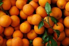 Много зрелые апельсины с зелеными листьями Стоковое фото RF