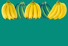 Много зрелый пук банана с космосом для текста на зеленой предпосылке Концепция здоровой еды Стоковые Изображения