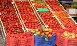 Много зрелых томатов в коробках на продаже стоковые фото