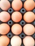 Много из яичек в черной панели яичка Стоковые Фотографии RF