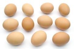 Много коричневое изолированное яичко цыпленка Стоковое фото RF