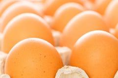 Много коричневых яичек Стоковые Фотографии RF
