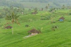 много коттедж в полях риса Стоковые Фотографии RF