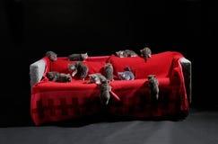 Много котят Стоковые Фото