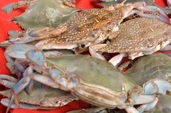 Много крабов на стойле в индюке Антальи рыбного базара Стоковая Фотография