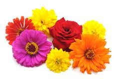 Много красивейших цветков Стоковые Фото