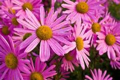 Много красивейших цветков Стоковая Фотография RF