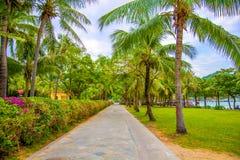 Много красивых высоких пальм растут близко, ладони aleya, тропический остров и красивые деревья растут к небу ashurbanipal Стоковая Фотография RF
