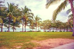 Много красивых высоких пальм растут близко, ладони aleya, тропический остров и красивые деревья растут к небу ashurbanipal Стоковые Фотографии RF