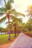 Много красивых высоких пальм растут близко, ладони aleya, тропический остров и красивые деревья растут к небу ashurbanipal Стоковые Изображения RF