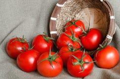 Много красные томаты около малой корзины Стоковое Изображение